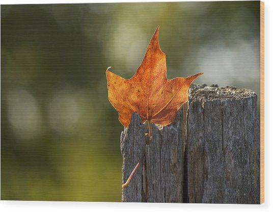 Simply Autumn Wood Print