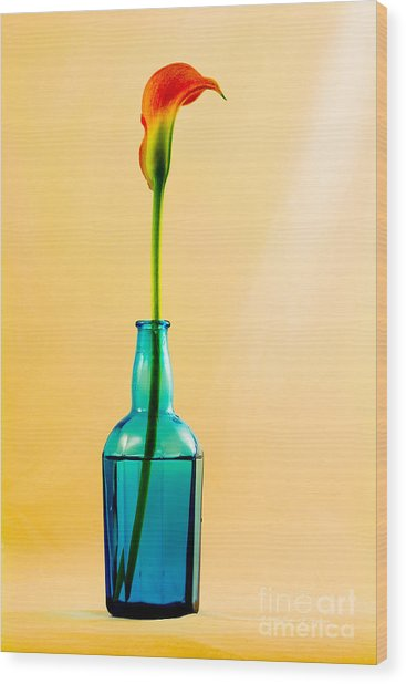 Single Calla In Blue Bottle Wood Print