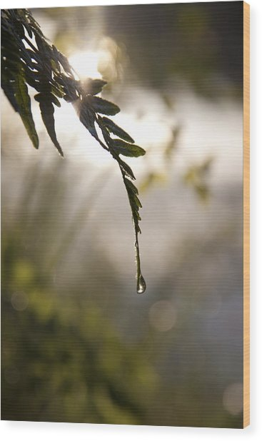 Single Drop Wood Print by Lindsey Weimer
