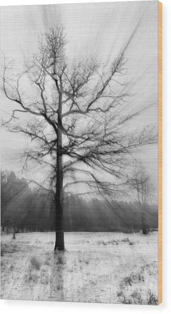 Single Leafless Tree In Winter Forest Wood Print