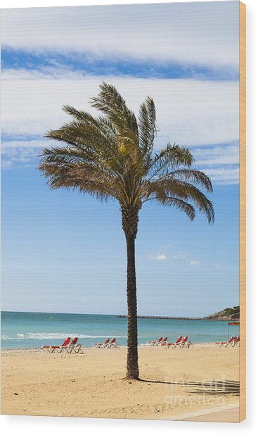 Single Palm Tree On Beach With Unoccupied Sun Loungers Wood Print