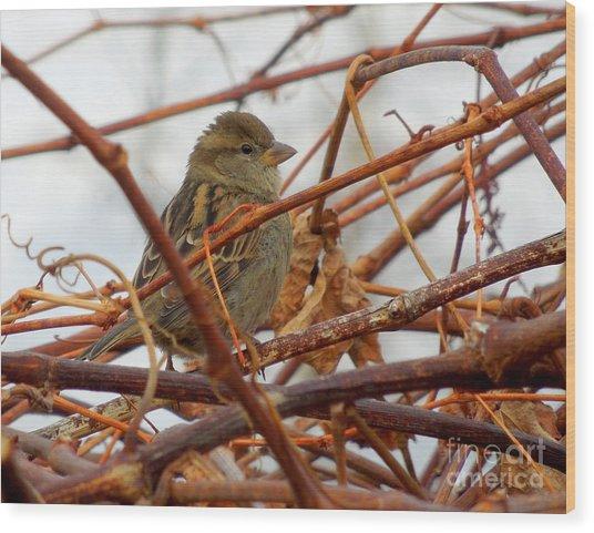 Single Sparrow Standing Wood Print