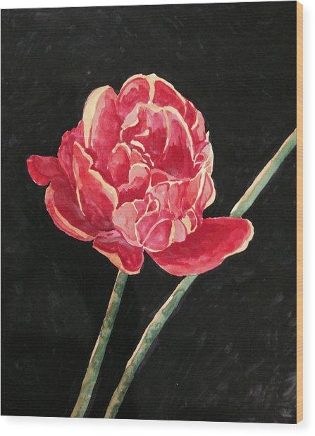 Single Tulip On Black Background Wood Print