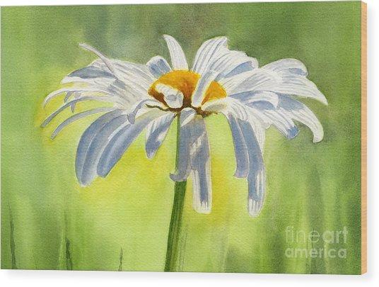 Single White Daisy Blossom Wood Print