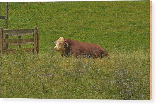 Sitting Cow Wood Print