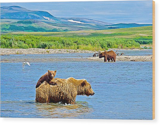 Six-month-old Cub Riding On Mom's Back To Cross Moraine River In Katmai National Preserve-alaska Wood Print