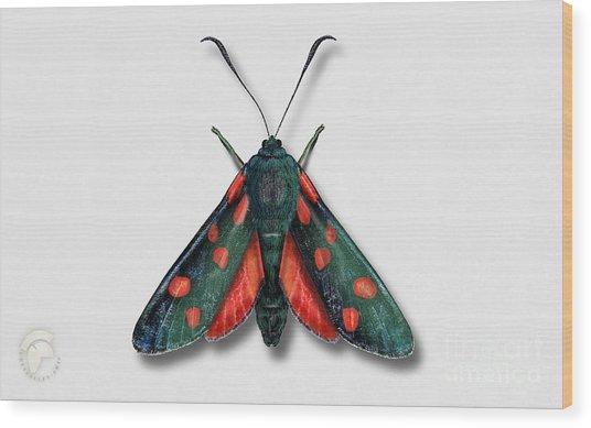 Six Spot Burnet Butterfly - Zygaena Filipendulae Naturalistic Painting - Nettersheim Eifel Wood Print