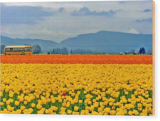 Skagit Valley Tulip Field Wood Print