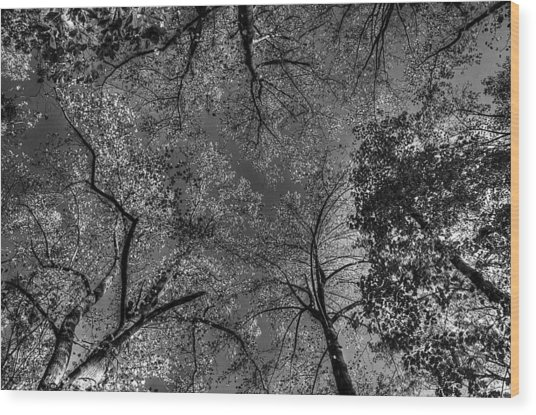 Skeletal Sky Wood Print