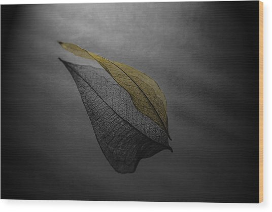 Skeleton Leaf 4716 Wood Print