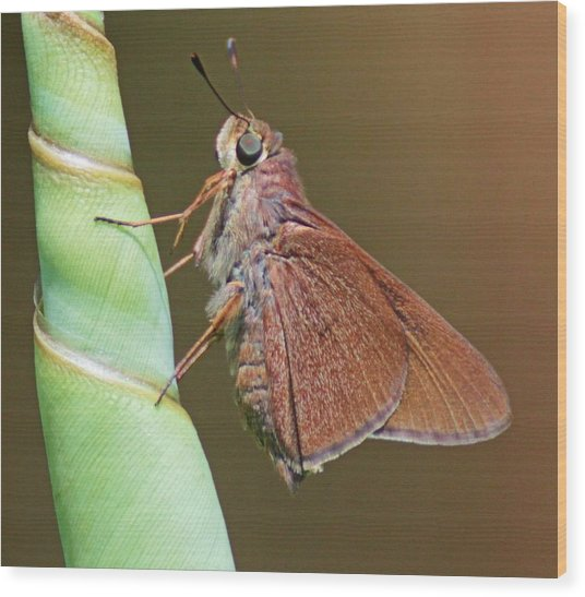 Skipper Butterful Wood Print by Dart and Suze Humeston