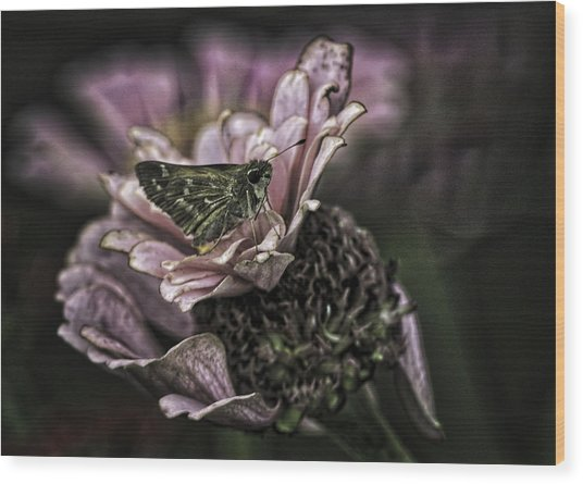 Skipper On Flower Wood Print