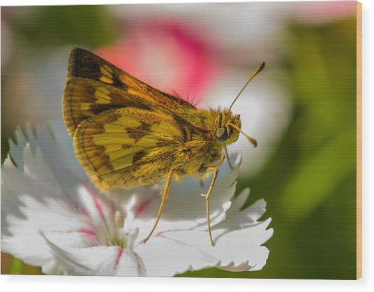Skipper Wood Print