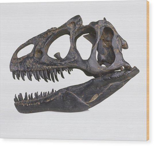Skull Of Allosaurus Wood Print by Dorling Kindersley/uig