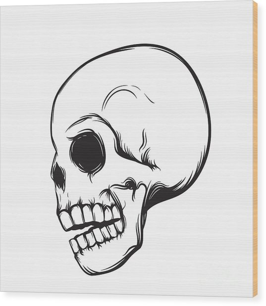 Skull, Side View, Isolated On White Wood Print by Nexusby