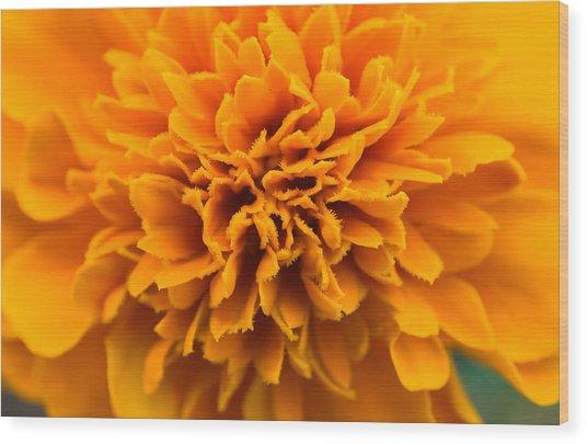 Skunk Flower Orange Wood Print