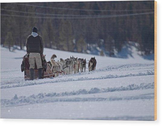 Sled Dog  Wood Print