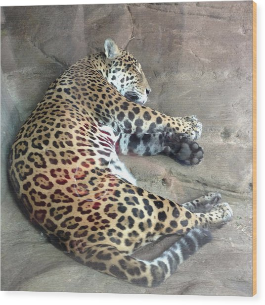 Sleep Time Jaguar Wood Print by Gary Govett