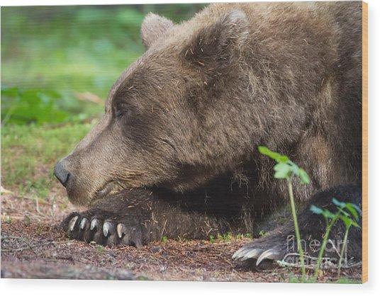 Sleeping Bear Wood Print