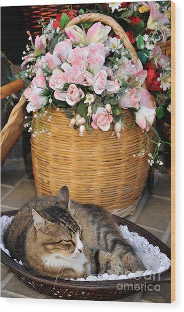 Sleeping Cat At Flower Shop Wood Print