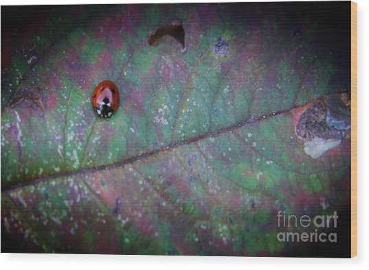 Sleeping Ladybird Wood Print by Jolanta Meskauskiene