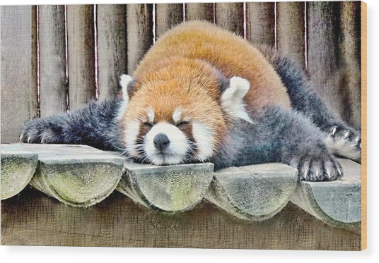Sleeping Red Panda Bear Wood Print