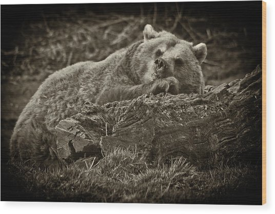 Sleepy Bear Wood Print