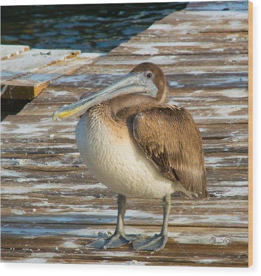Sleepytime Pelican II Wood Print