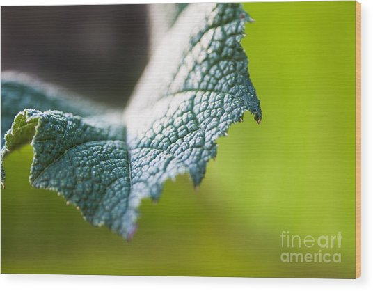 Slice Of Leaf Wood Print