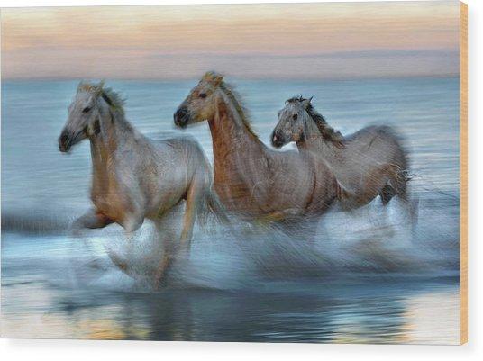 Slow Motion Horses Wood Print by Xavier Ortega