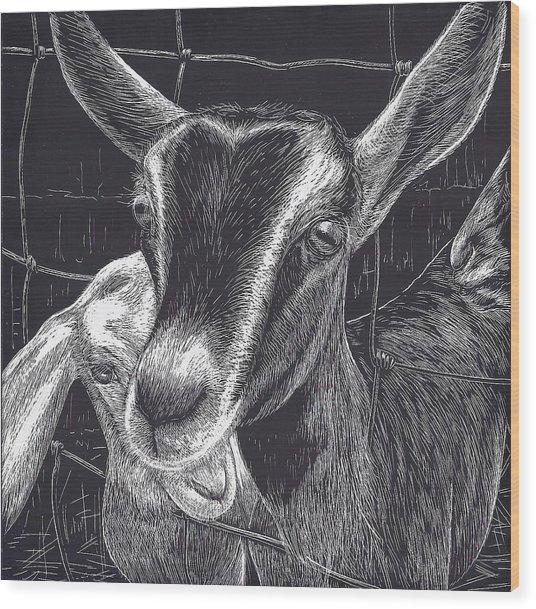 Slow Turtle Farm Goats Wood Print by Jennifer Harper