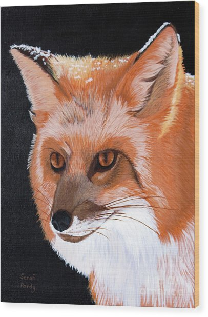 Sly Red Fox Wood Print