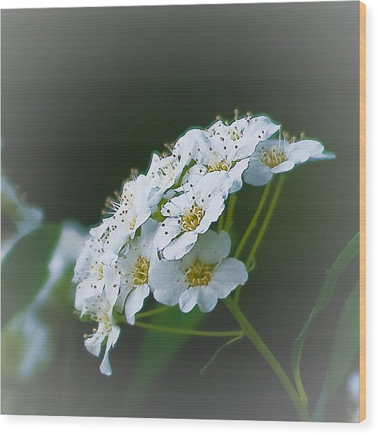 Small Beauty Wood Print