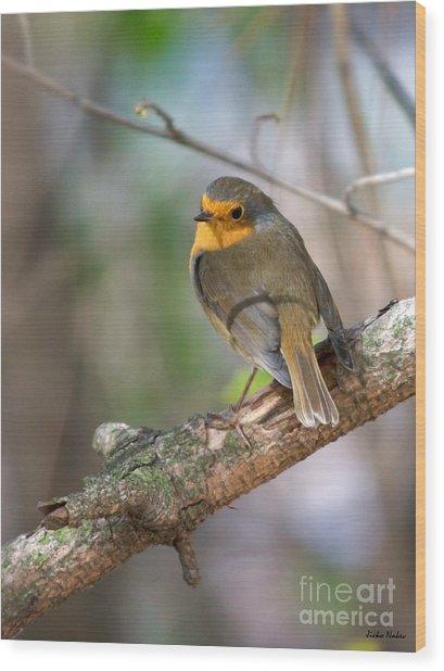 Small Bird Robin Wood Print
