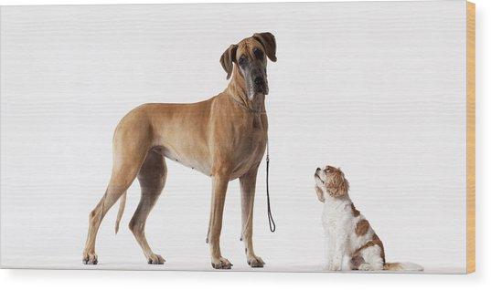 Small Dog Looking At Bigger Dog Wood Print by Martin Barraud