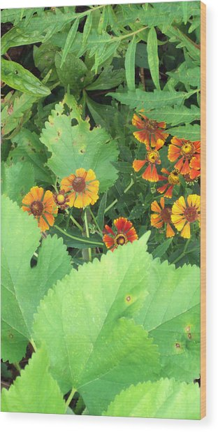Small Flowers Wood Print by Cynthia Harvey