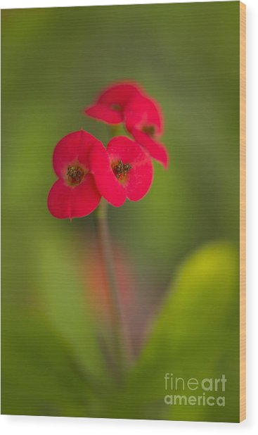 Small Red Flowers With Blurry Background Wood Print