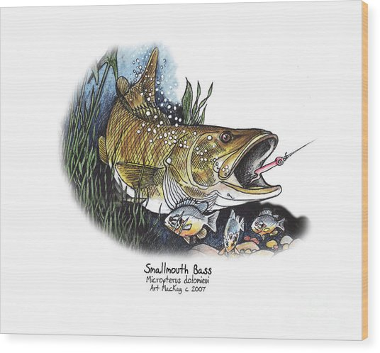 Smallmouth Bass Wood Print
