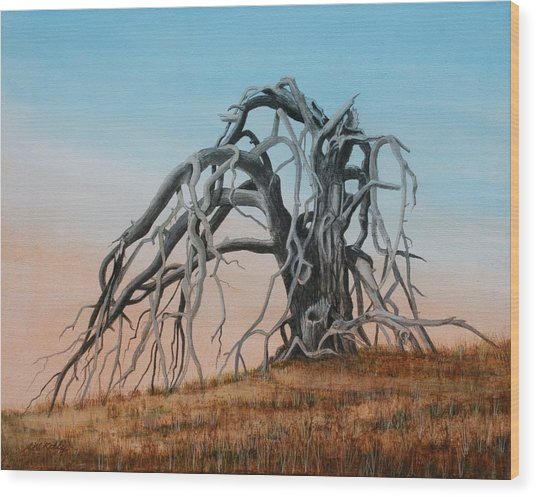Smiley Canyon Tree Wood Print by J W Kelly