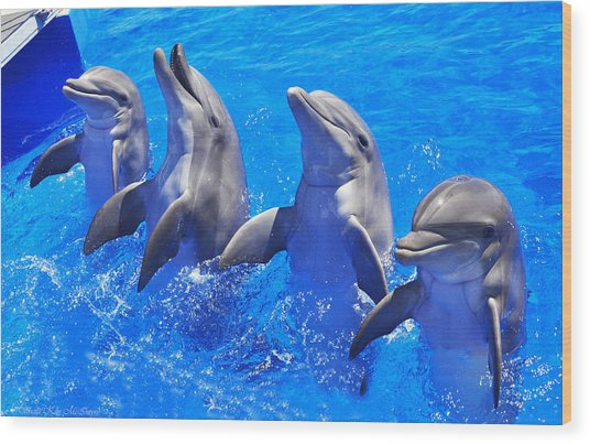 Smiling Dolphins Wood Print