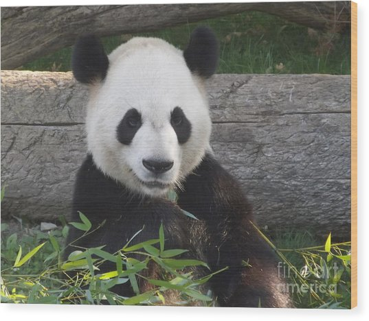 Smiling Giant Panda Wood Print