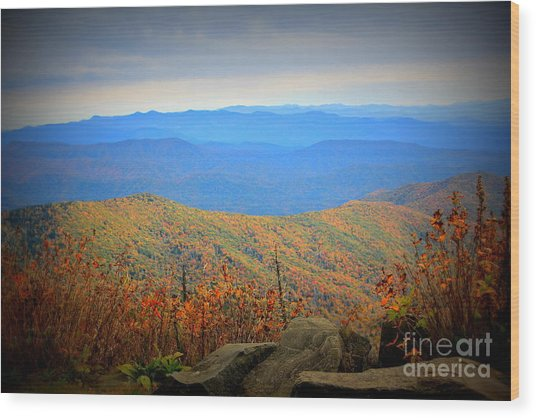 Smokies In The Autumn Wood Print