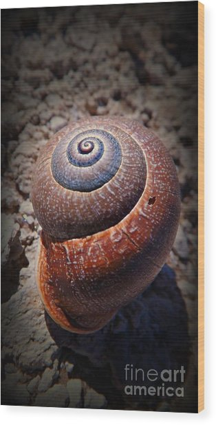 Snail Beauty Wood Print