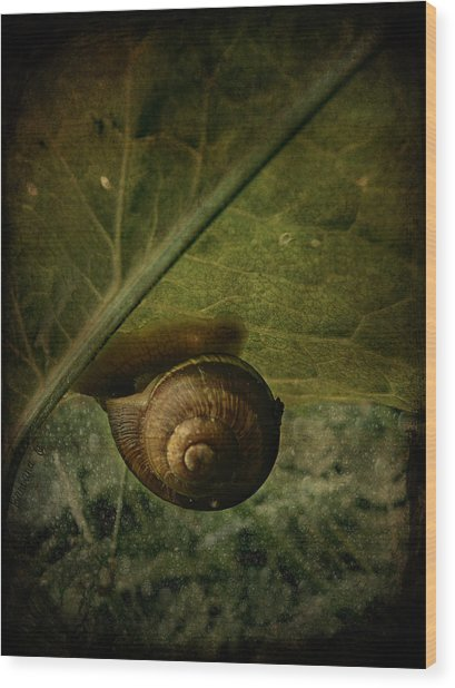 Snail Camp Wood Print
