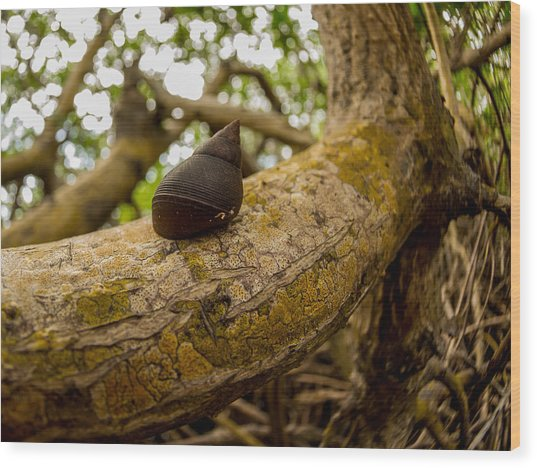 Snail Wood Print by Carl Engman