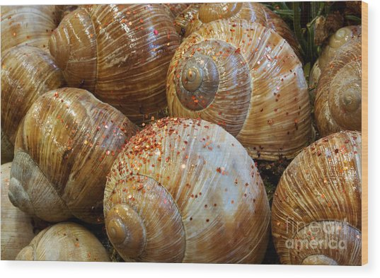 Snail Houses Wood Print by Jolanta Meskauskiene