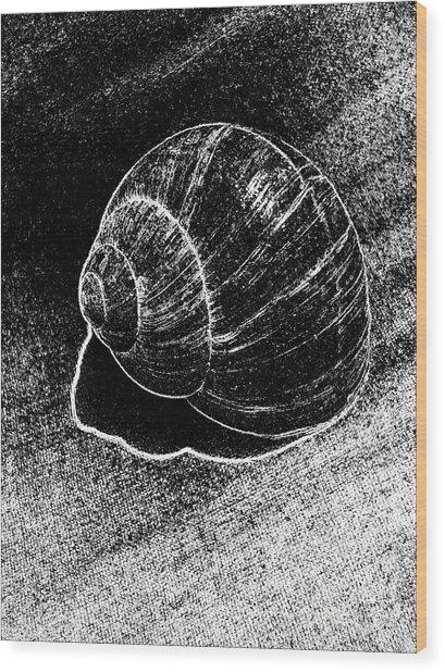 Snail Shell Black And White Art No.11 Wood Print by Drinka Mercep