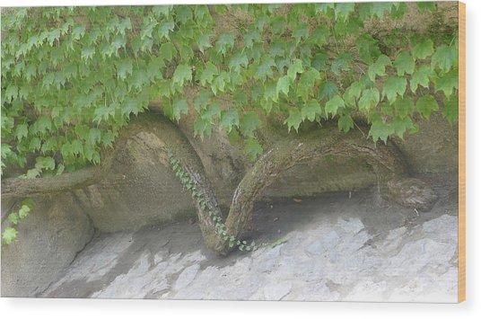 Snake Branch Wood Print