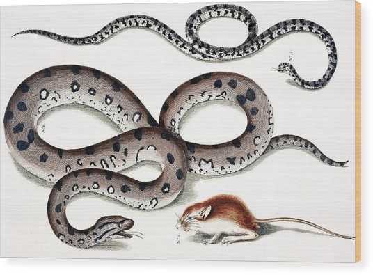 Snakes And Prey Wood Print
