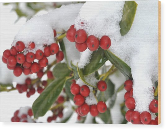 Snow Berries Wood Print